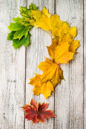 Maple leaves with color gradient on white wooden background arranged in the shape of a question mark. Autumn Concept question. Stock Photo