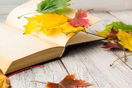 Open Book and colorful maple leaves on white wooden background. Stock Photo