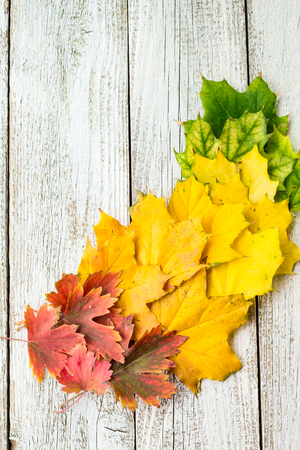 Autumn composition with colorful leaves of different trees in a corner of the frame with copy space on a white wooden background. Stock Photo