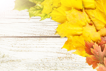 Autumn composition with colorful leaves of different trees in a corner of the frame with copy space on a white wooden background, toned