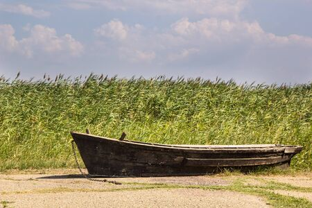 Old fishing boat on the asphalt on the background of reeds 版權商用圖片