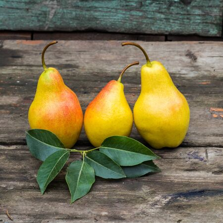 fresh pears with leaves on the dark rustic wooden table.