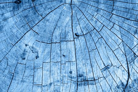 transverse cutting of an old dry wood in classic blue trendy color. background. Color of the year 2020.