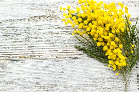 Branch of yellow spring flowers mimosa on white wooden background with copyspace. Top view