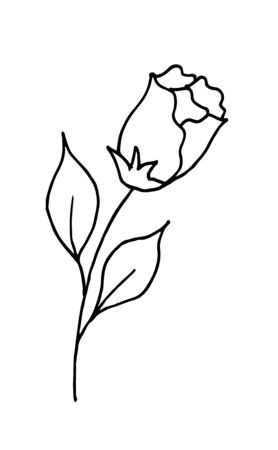 Rose is a hand drawing doodle cartoon. A blossoming rosebud. Vector illustration.