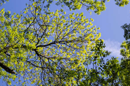 the top of green trees seen from below