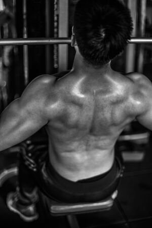 back muscles: Back muscles
