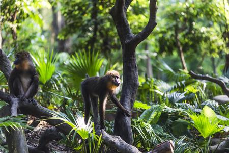 land mammals: monkey