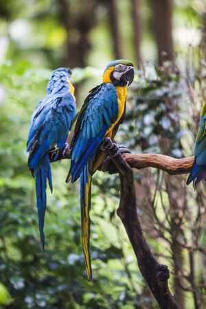 mating: parrot Stock Photo
