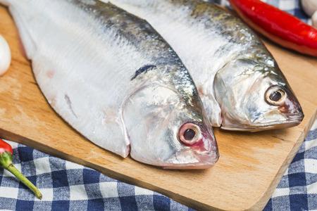 west bengal: Ilish fish of Southeast Asia