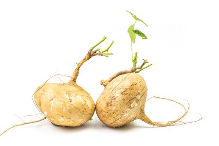 Whole single Jicama isolated on white background Stock Photo