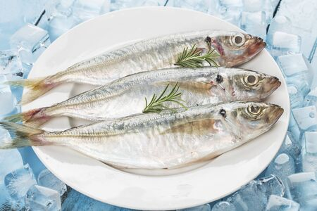 raw mackerel with  ices