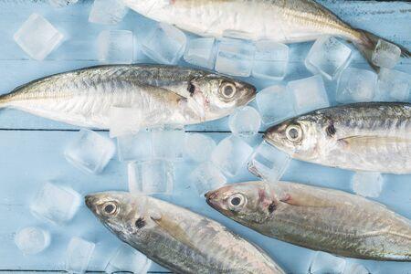 Fish mackerel,raw mackerel with ice cubes Stock Photo