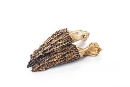 Morel mushroom isolated on white background 写真素材