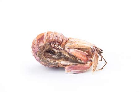 Steamed Pipi Shrimp on white background