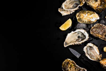 Opened oysters, ice and lemon on a black background. Reklamní fotografie