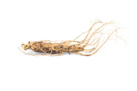 ginseng isolated on white background 写真素材 - 161934354