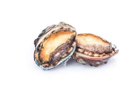 Raw abalones on the white background Stock fotó