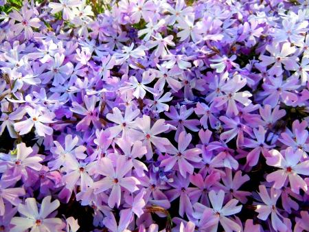 awaking:  Morning Garden Light flowers awaking towards sun