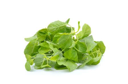 fresh spinach: fresh spinach on white background