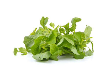 chinese spinach: fresh spinach on white background