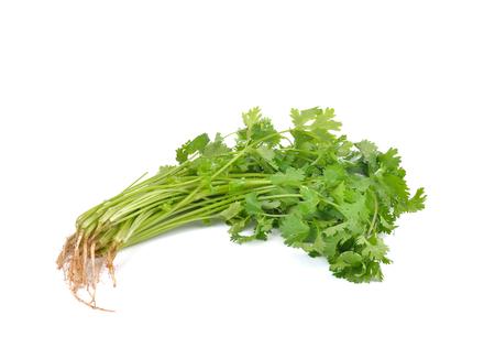 culantro: cilantro sobre fondo blanco