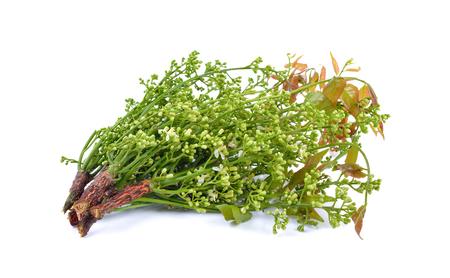 neem: Siamese neem tree, Nim, Margosa, Quinine