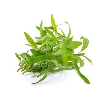 tarragon: Tarragon herbs  on white background