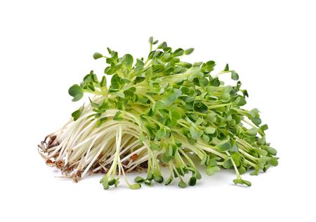 Haufen von Alfalfa-Sprossen auf weißem Hintergrund Standard-Bild