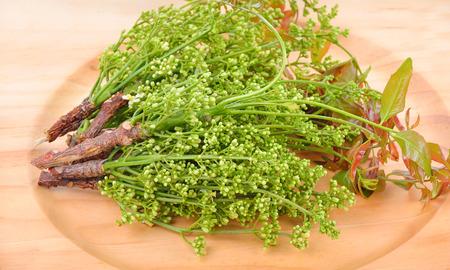 quinine: Siamese neem tree, Nim, Margosa, Quinine