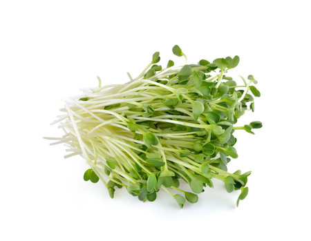 alfalfa sprouts or kai wah-rei on white background