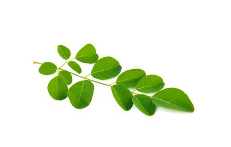 Moringa leaves on white background