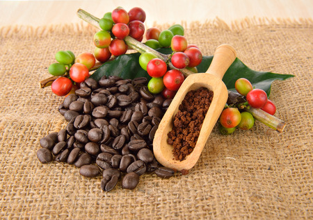 coffee beans  and roasted coffee seeds Stock Photo