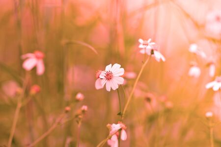 Nature warm background 版權商用圖片