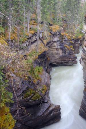 Athabasca Falls in the Rocky Mountains of Canada. Between the cliffs above the water stuck logs. Cloudy day in Jasper National Park