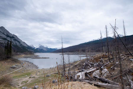 Dead trees destroyed by forest fire, al lake in the middle, Canada