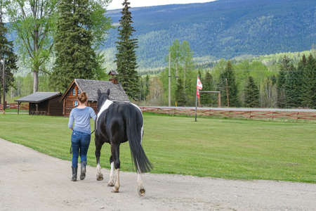 A young woman is walking with a horse in Banff national park