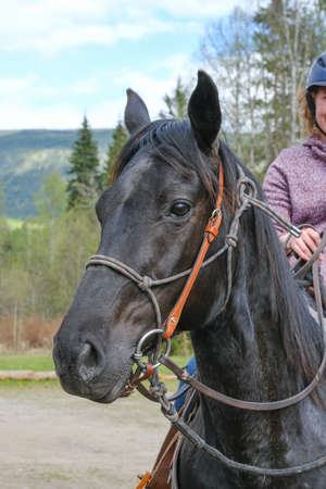A young woman riding a horse, part of horse, front view in Banff national park