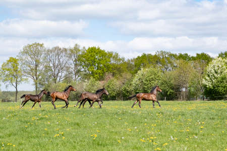 Magical natural landscape. A view of a herd of horses. At a sunny day. Blue sky. Free galloping dressage and show jumpers stallions in a meadow. Breeding. Animals. concept background Stock fotó