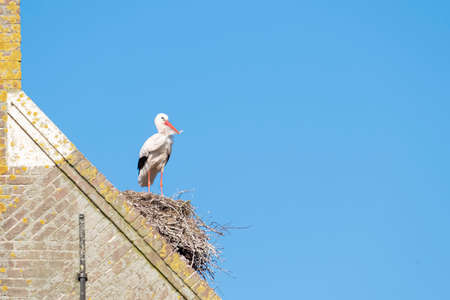A stork stands on a chimney in its nest, the wind blows through the feathers, blue sky in background.