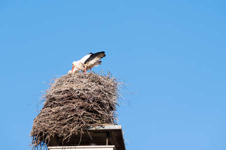 A stork stands in its nest on a chimney, in the spring , blue sky in background. Banco de Imagens