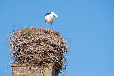 A stork stands in its nest on a chimney, the bird shakes out its wing, blue sky in background. Banco de Imagens