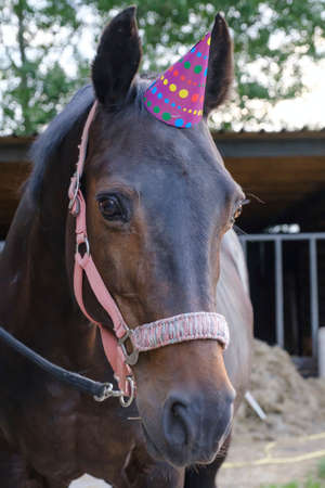 A head of a brown mare with a party hat, tree in background. Background for greeting card, congratulations, invitations. 写真素材