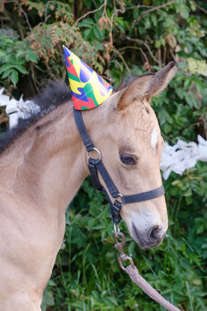 The head of a yellow foal with a party hat and guirlandes in the trees. Background for greeting card, congratulations, invitations. 写真素材