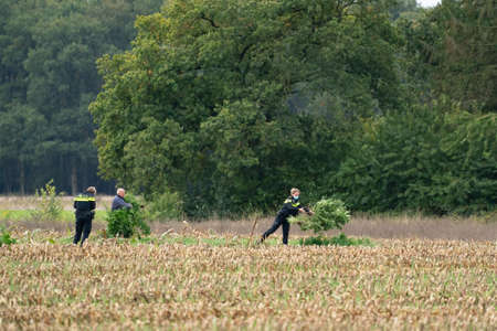 Ravenswoud - October 15 2020: Ravenswoud, Friesland, The Netherlands. Marijuana is collected from a freshly mown corn field by two police women and a farmer. The Netherlands