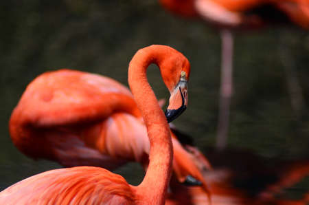 Wonderful red flamingo portrait