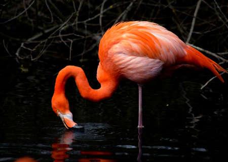 Fantastic Red Flamingo Archivio Fotografico