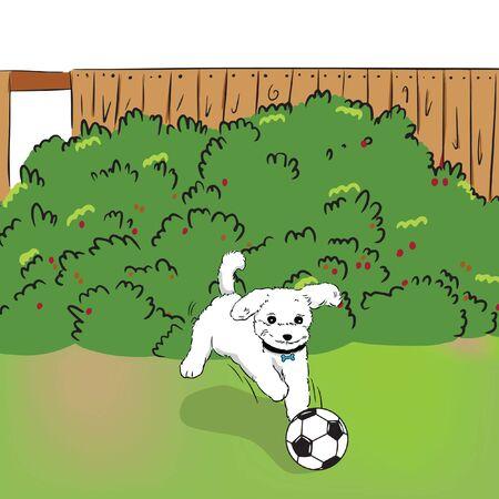 dog running catch the ball in garden vector