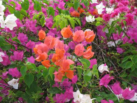紙の花びらの花 写真素材