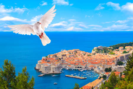 White dove flies over the beautiful historic city of Dubrovnik, Croatia on a sunny day. Stock Photo